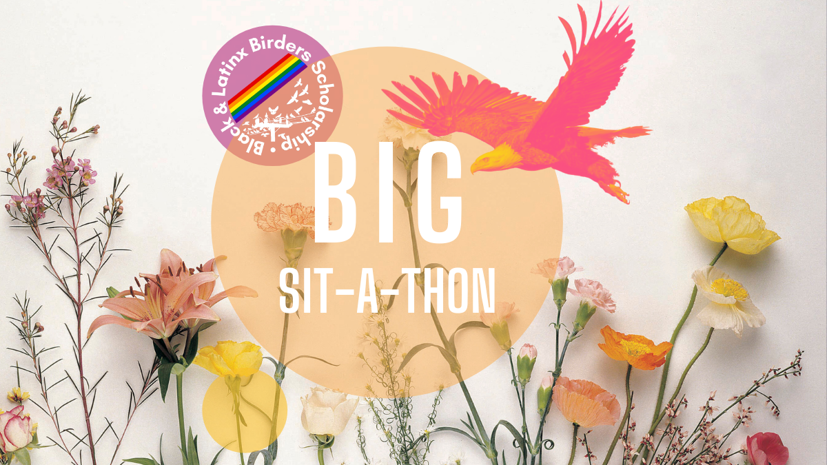 Black and Latinx Birders Scholarship Logo with the words BIG SIT-A-THON. Flowers and a Bald Eagle.