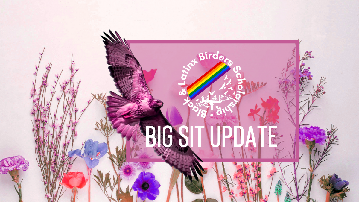 BIG SIT UPDATE with a Rde-tailed Hawk and Black and Latinx Birders logo with flowers in the background.