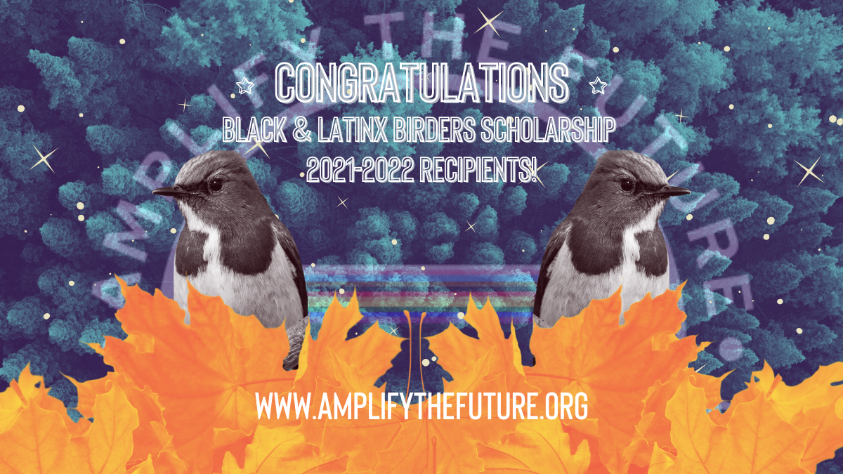 [Image: top: aerial view of evergreen forest with blue overlay; center: mirrored image of a bird in black in white overlay; bottom: maples leaves in a pile in orange overlay. Text: Congratulations (with stars on each side) Black & Latinx Birders Scholarship 2021-2022 Recipients! ]